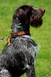 Jagdhund mit afrikanischem Halsband in Rot-Orange